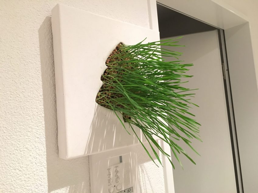 Pflanzenbild Experiment